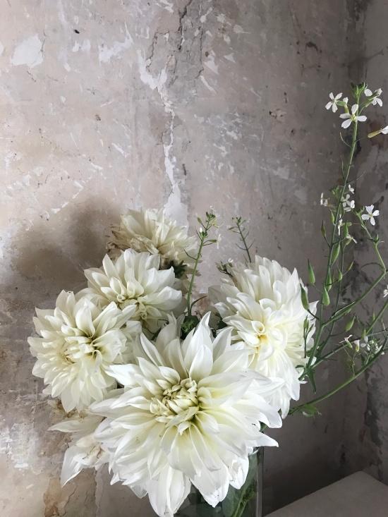 whitedahlia